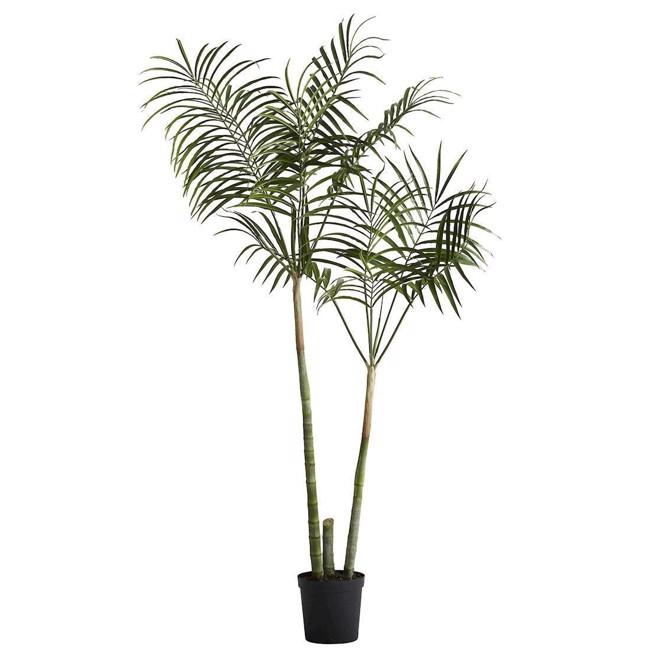 Billede af Flora kentia palme grøn